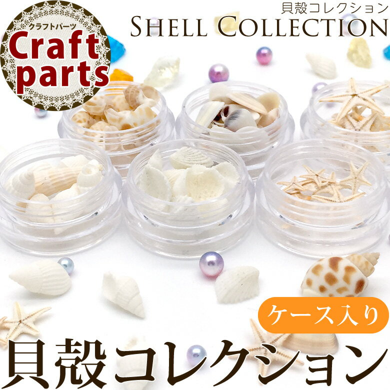 貝殻コレクション ケース入り