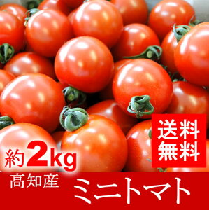 【送料無料】高知産・四国産ミニトマト プチトマト約2kg10P01Mar15高知トマトサミット05P03Sep16