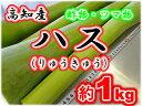高知産・ハス りゅうきゅう ハスイモ 蓮芋約1kg