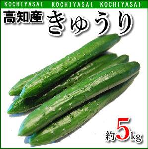 【送料無料】高知産・きゅうり約5kg入り・