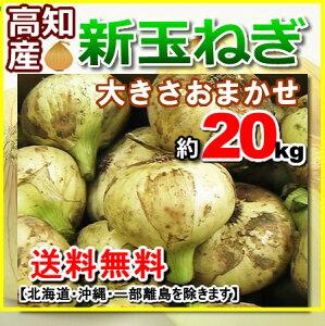 【送料無料】高知産新玉ねぎたまねぎ約20kg春掘れオニオンサラダ