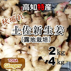 【送料無料】高知産 新生姜約4kg 露地栽培