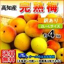 【送料無料】高知産完熟梅約4kg南高梅白加賀