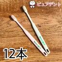 【メール便専用送料無料☆】ライオン システマ SP-T 歯ブラシ 12本