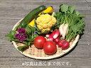【減農薬】おまかせ新鮮野菜セット【洞爺湖町産】【安心・安全】