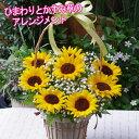 【送料無料】ひまわり かすみ草 アレンジメント フラワーアレンジメント 人気 ギフト 花