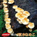 幻の国産原木なめこ500g【送料無料】