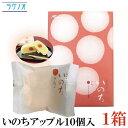 ラグノオ ささき いのち アップル 10個入×1箱(りんご カスタードケーキ)