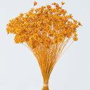 《 ドライフラワー 》★即日出荷★大地/オオチノウエン(ソクジツ) スターフラワー・ミニ オレンジ ハーバリウム