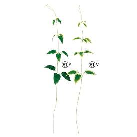 《 造花 グリーン 》Asca/アスカ クレマチスリーフインテリア フェイク グリーン