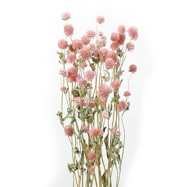 《 ドライフラワー 》★即日出荷★大地/オオチノウエン(ソクジツ) 千日紅 ピンク ハーバリウム