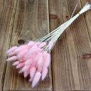 《 ドライフラワー 》東北花材/トウホクカザイ ★即日出荷★ラグラス ピンク ハーバリウム