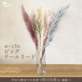 《 ドライフラワー 》★即日出荷★大地農園 ビッグテールリード 大地農園 ドライフラワー スワッグ ブーケ 花材 白