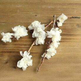 《 プリザーブドフラワー 》★即日出荷★大地 桃の花 白ハーバリウム プリザーブドローズ プリ