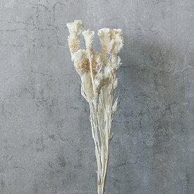 《 ドライフラワー 》★即日出荷★大地農園 ケイトウ ナチュラル 花材 材料 スワッグ アレンジ オフホワイトドライ