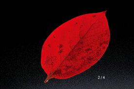 ミニクリアシート 柿の葉(200枚入) 型抜きクリアシート キッチン 日本製 料理演出 和食料理 飲食店 ホテル 旅館