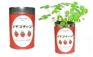 栽培セット リトルガーデン 園芸 ガーデニング インテリア ギフト 室内 かわいい 栽培キット トマト ヒマワリ イチゴ ミント バジル