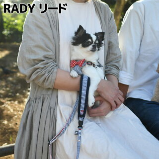 RADYリード