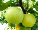 【鳥取の旬のフルーツ[初秋」】新品種の梨!なつひめ2.5kg箱8月下旬より順次発送〜
