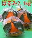 広島の旬の柑橘「はるみ」自然熟「葉付きはるみ」2月末ごろより順次発送予定
