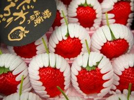熊本の旬の果物きくちのまんま【ひのしずく】苺 厳選イチゴ熊本いちご1月末ごろから順次発送予定【同梱・日時指定不可】1月〜2月が旬のくだもの