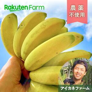 【ポイント15倍】こだわり農家直送 広島県 アイカネファーム 三尺バナナ2kg