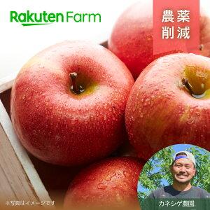 シナノスイート3kg【ポイント15倍】【予約商品】こだわり農家直送 長野県 カネシゲ農園 りんご