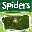 Spiders: Discover These Pictures And Facts Of Spiders For Kids