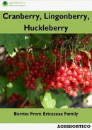 Cranberry, Lingonberry and Huckleberry: Berries from Ericaceae Family