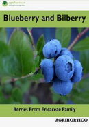 Blueberry and Bilberry: Berries from Ericaceae Family
