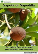 Sapota or Sapodilla: Growing Practices and Nutritional Information
