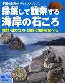 採集して観察する海岸の石ころ