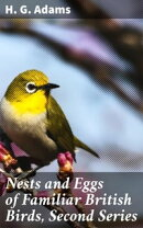 Nests and Eggs of Familiar British Birds, Second Series