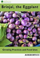 Brinjals: Growing Practices and Food Uses