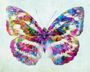 Butterfly Without Hope