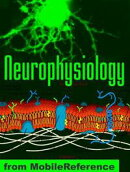 Neurophysiology Study Guide: Membranes And Transport, Ion Channels, Electrical Phenomena, Action Potential, …