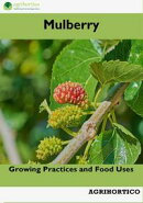 Mulberry: Growing Practices and Food Uses