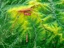 ジオラマ地図 伊吹山