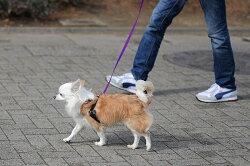 【引っ張り防止】ハーネス_犬_ハッピーヒールハーネス_リード&DVD付き愛犬の引っ張りを止めるトレーニングハーネス犬用しつけハーネス_ペット用ハーネス(ギフト包装可あす楽)