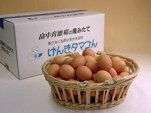 普段使い卵160個入