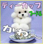 プードル/ぬいぐるみプードル/リアルぬいぐるみ/