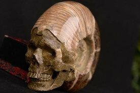【一点物】アンモナイト化石 ヒューマンスカル(人間頭蓋骨) カービング(彫刻) 1287g 白亜紀 マダガスカル産【送料無料】