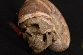 【一点物】アンモナイト化石 ヒューマンスカル(人間頭蓋骨) カービング(彫刻) 3168g|白亜紀|マダガスカル産【送料無料】