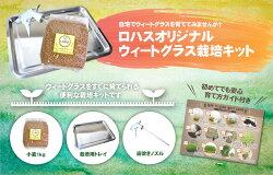 【送料無料】ウィートグラス栽培キット秋まき小麦の種(北海道産・無農薬)小麦若葉スーパーフード