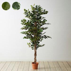 人工観葉植物 フィカス ハイタイプ ゴムの木 フェイクグリーン インテリアグリーン 造花 観葉植物 人工 フェイク グリーン(代引不可)【送料無料】