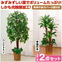 観葉植物 インテリアグリーン 2点セット 人工観葉植物 造花 光触媒 水やり不要 ベンジャミン 幸福の木(代引不可)【ポイント10倍】【送料無料】