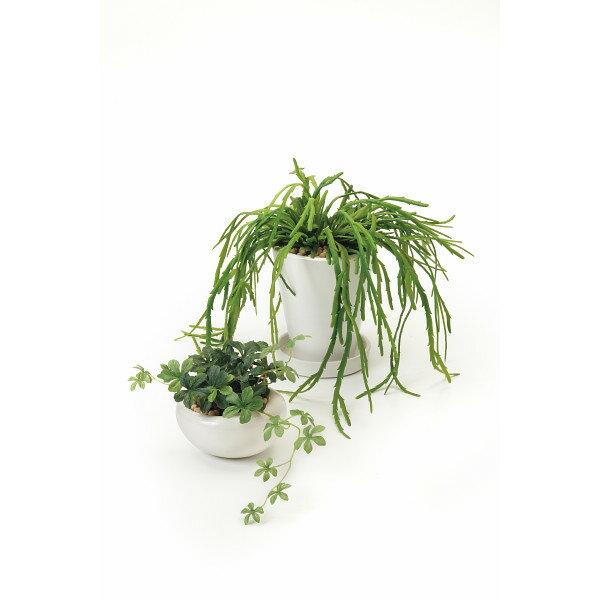 GREENPARK シュガーバイン リプサリス2個セット(造花) 室内装飾品 花 グリ-ン ア-トアレンジ花 PRSY-0101(代引不可)