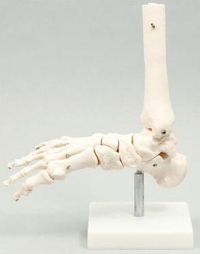 足関節模型9706
