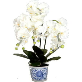 光触媒 胡蝶蘭 3本立て 白