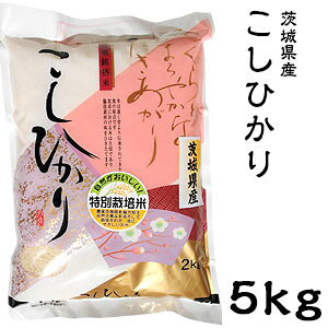 米 日本米 Aランク 令和2年度産 茨城県産 こしひかり 5kg ご注文をいただいてから精米します。【精米無料】【特別栽培米】【新米】【コシヒカリ】(代引き不可)【送料無料】